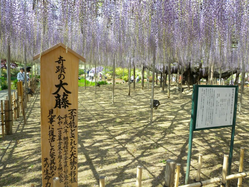 20140427ashikaga 149