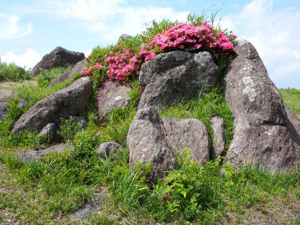 20140624押戸石の丘 053